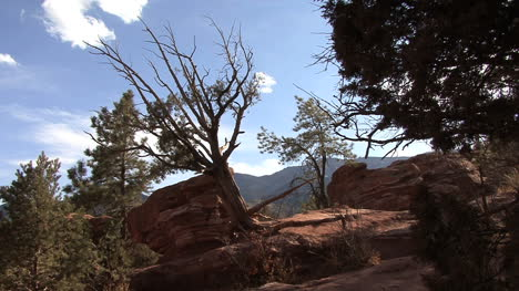 Colorado-Garden-of-the-Gods-trees