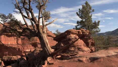 Colorado-Garden-of-the-Gods-tree-and-rock