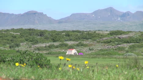Iceland-Pingvellir-tent-and-flowers