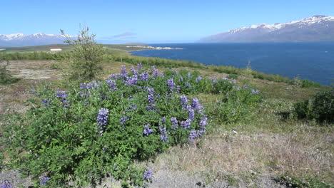 Iceland-Eyjafjordur-&-Hauganes-village-scene-c