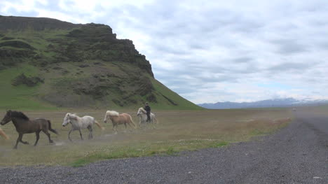 Iceland-Horses-zooms-out-s1