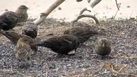 Colorado-birds-feeding-3