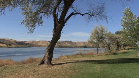 Idaho-Snake-River-with-tree