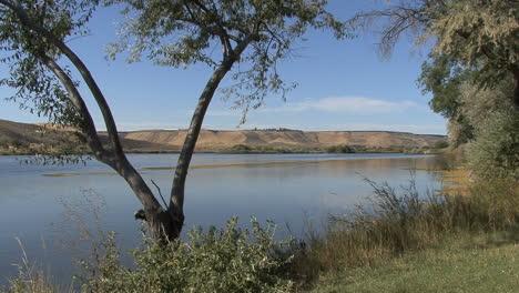 Idaho-Snake-River-v-shaped-tree