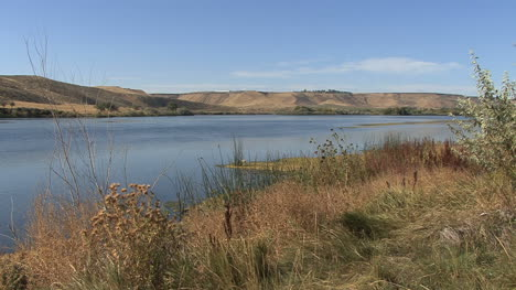 Idaho-Snake-River-with-weeds