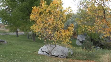 Idaho-tree-in-rock-crack-2