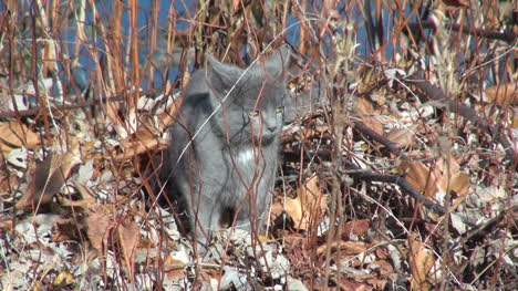 Grey-cat-sitting-on-leaves