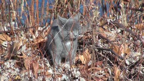 Graue-Katze-Sitzt-Auf-Blättern