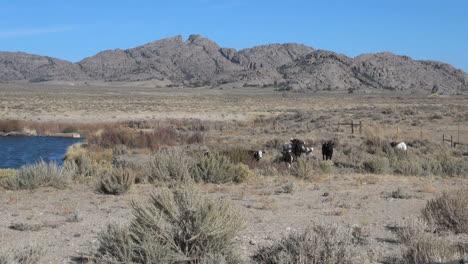 Wyoming-Split-Rock-Y-Río-De-Agua-Dulce-Con-Ganado