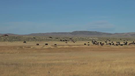 Pantano-De-Hielo-De-Wyoming-Con-Ganado