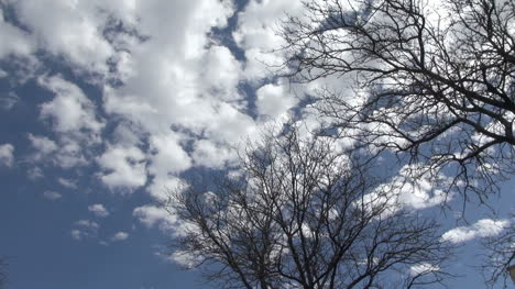 Clouds-move-over-a-barren-tree