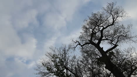 Clouds-and-tree-time-lapse-c