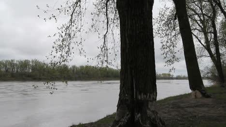 Missouri-trees-by-Missouri-River-c