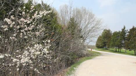 Missouri-spring-lane-c