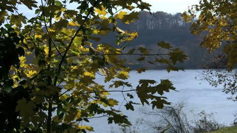 Pennsylvania-Delaware-River-leaves-in-wind-4k