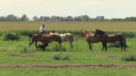 Argentine-Pampas-horse-and-rider-s1