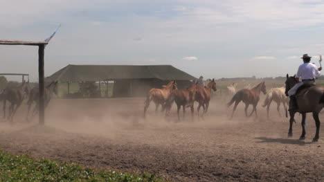 Argentine-Estancia-horses-editorial