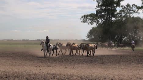 Argentine-Estancia-horses-editorial-3s