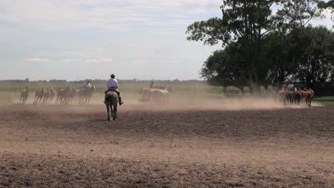 Argentine-Estancia-horses-editorial-5s