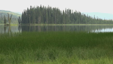 Canada-Alberta-marshy-lake-with-forest-on-island-s
