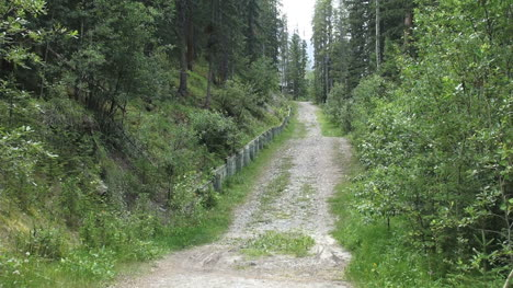 Canada-Alberta-lane-through-woods-s