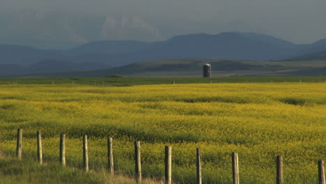 Canada-Alberta-crops-with-fence-and-mountains-s