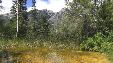 Canada-Alberta-Banff-marsh-with-clear-water-algae-banff-marsh-and-mountain