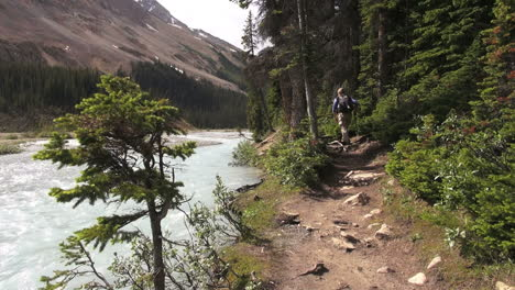 Canada-Alberta-Banff-Bow-Lake-hiking-trail-along-stream-13