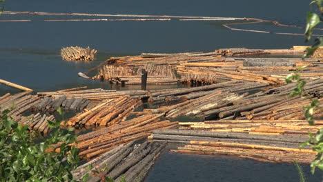 British-Columbia-Adams-Lake-floating-logs