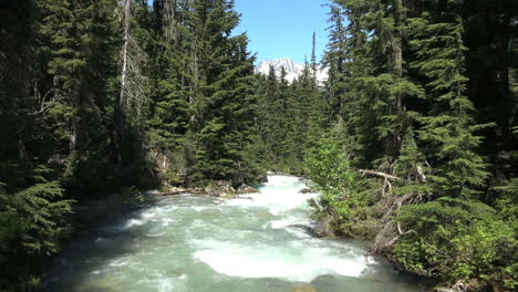British-Columbia-Glacier-NP-Rogers-Pass-stream-and-trees