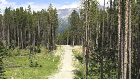 Canada-Alberta-Banff-disc-golf-course-through-tall-trees-9