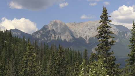 Canada-Alberta-near-Jasper-forest-tree-and-mountains