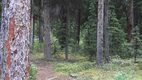 Canada-Alberta-path-in-forest