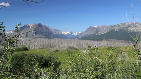 Montana-dead-trees-by-Glacier-NP-wide-view-c