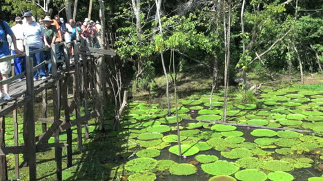 Amazon-water-lilies-and-tourists