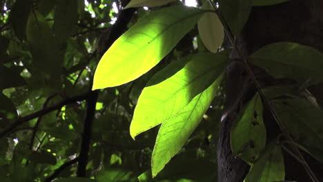 Sun-through-jungle-leaves-p