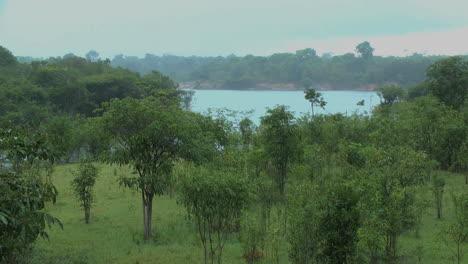 Amazonasregen-Und-Blick-Auf-Den-Fluss