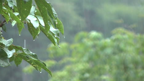 Amazon-rain-framed-by-leaves