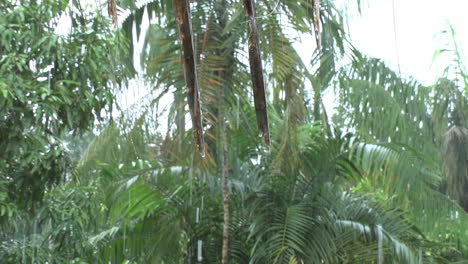 Amazonas-Regen-Zoomt-Raus