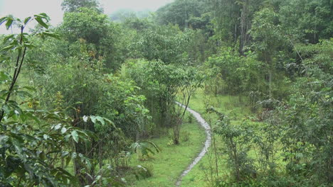 Amazon-rain-and-muddy-path