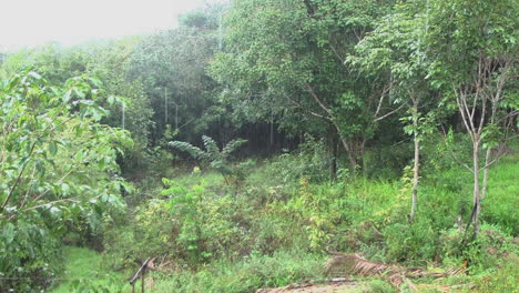 Amazon-rain-on-jungle-edge