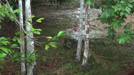Amazon-rain-puddles-on-the-ground
