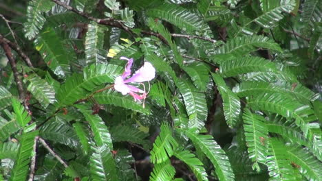 Amazon-flower-in-tropical-rain