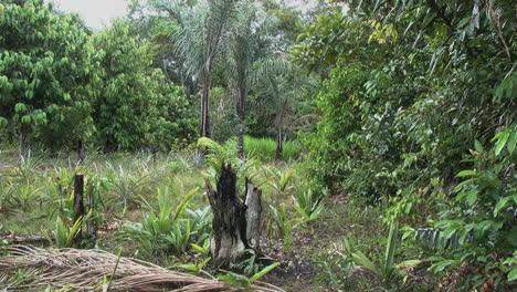 Amazonasgarten-Mit-Verbranntem-Stumpf