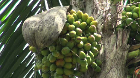 Amazon-jungle-garden-palm-fruits