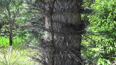 Amazon-spiny-tree-trunk