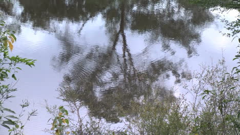 Amazon-jungle-reflections-in-water
