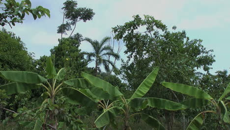 Amazon-jungle-plants-and-sky