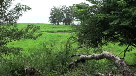 Brazil-Boca-da-Valeria-Amazon-flood-plain