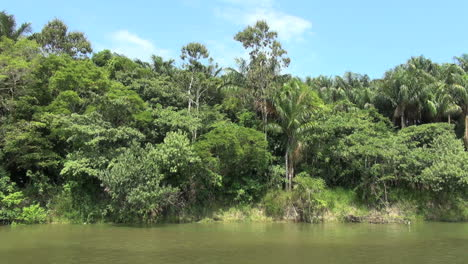 Brazil-Amazon-backwater-jungle-from-bank-s